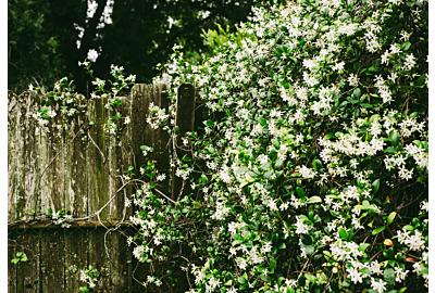 Die schönsten Frühblüher: Welche Sträucher blühen als erstes?
