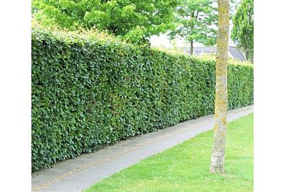 Gute Gründe für eine Hecke im Garten