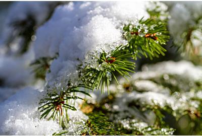 5 Tipps, wie man Schnee im Garten richtig räumt