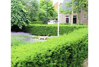 Garten neu gestalten: Hierauf sollten Sie bei der Gartengestaltung achten