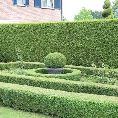 Inspiration für die Gartengestaltung: Sträucher & Hecken