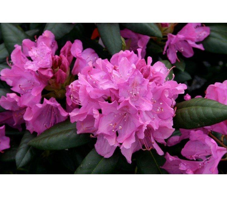 Die schönsten Frühlingsblüher - Welche Pflanzen blühen im Frühling?