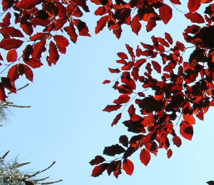 Ein roter Strauch bringt Farbe in den Garten - Unsere Favoriten