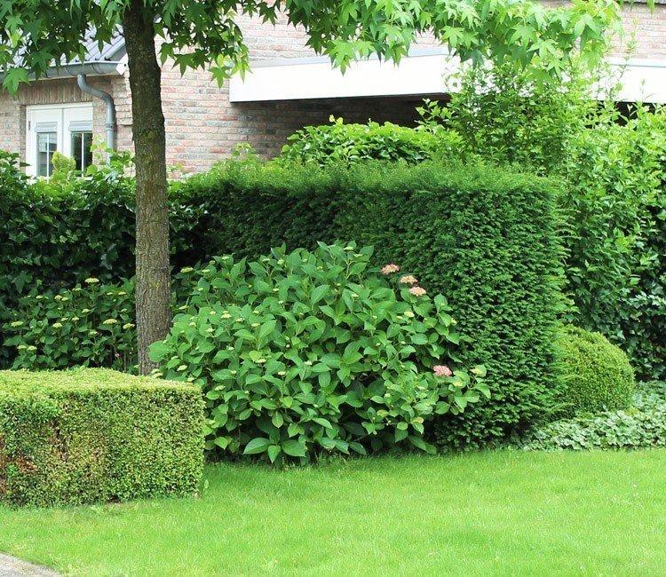 Was tun bei Raupen im Buchsbaum? Den Buchsbaumzünsler bekämpfen