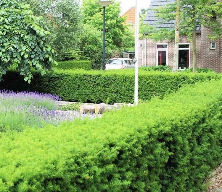 Die schönsten Pflanzen für Ihre Vorgarten-Hecke