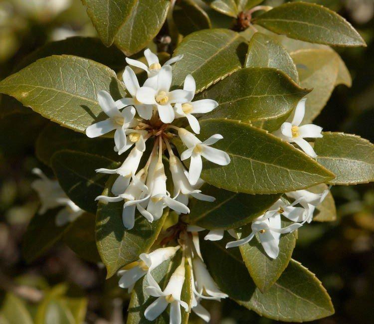 Vorgartenhecke bis Frühlingsblüher: Schöne Sträucher für jeden Garten
