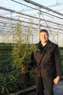 Bambus (100-125 cm) Pot