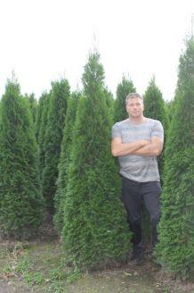 Lebensbaum 'Smaragd' Wurzelballen 200-225 cm Extra Qualtität Clod